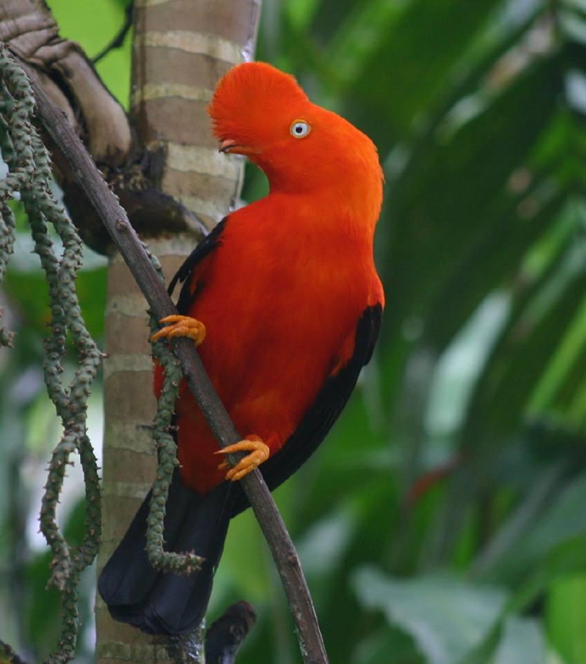 1 Septiembre - emisora paz de selva verde