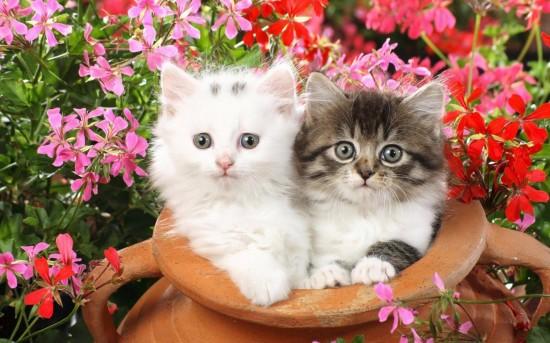 20 Agosto Paz de Selva Verde Cats gatos olla de barro con flores