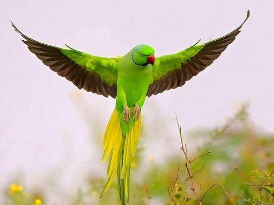 30Agosto Paz de Selva Verde - Emisora