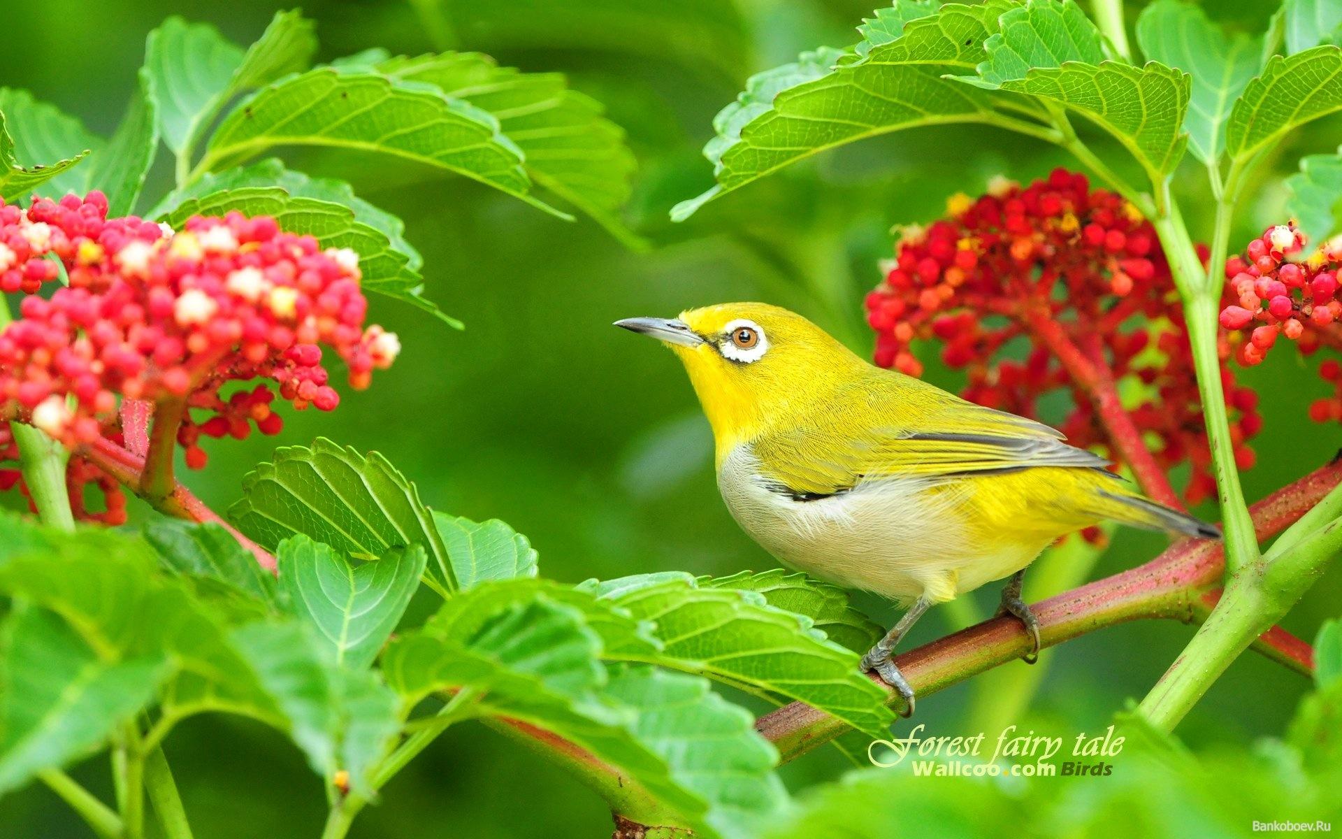 19 Sep Emisora Paz de Selva Verde