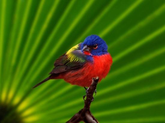 9 Septiembre Paz de Selva Verde