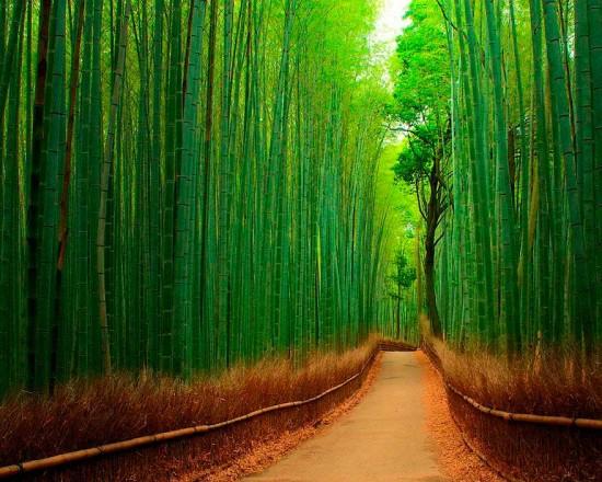 22 Octubre Paz de Selva Verde