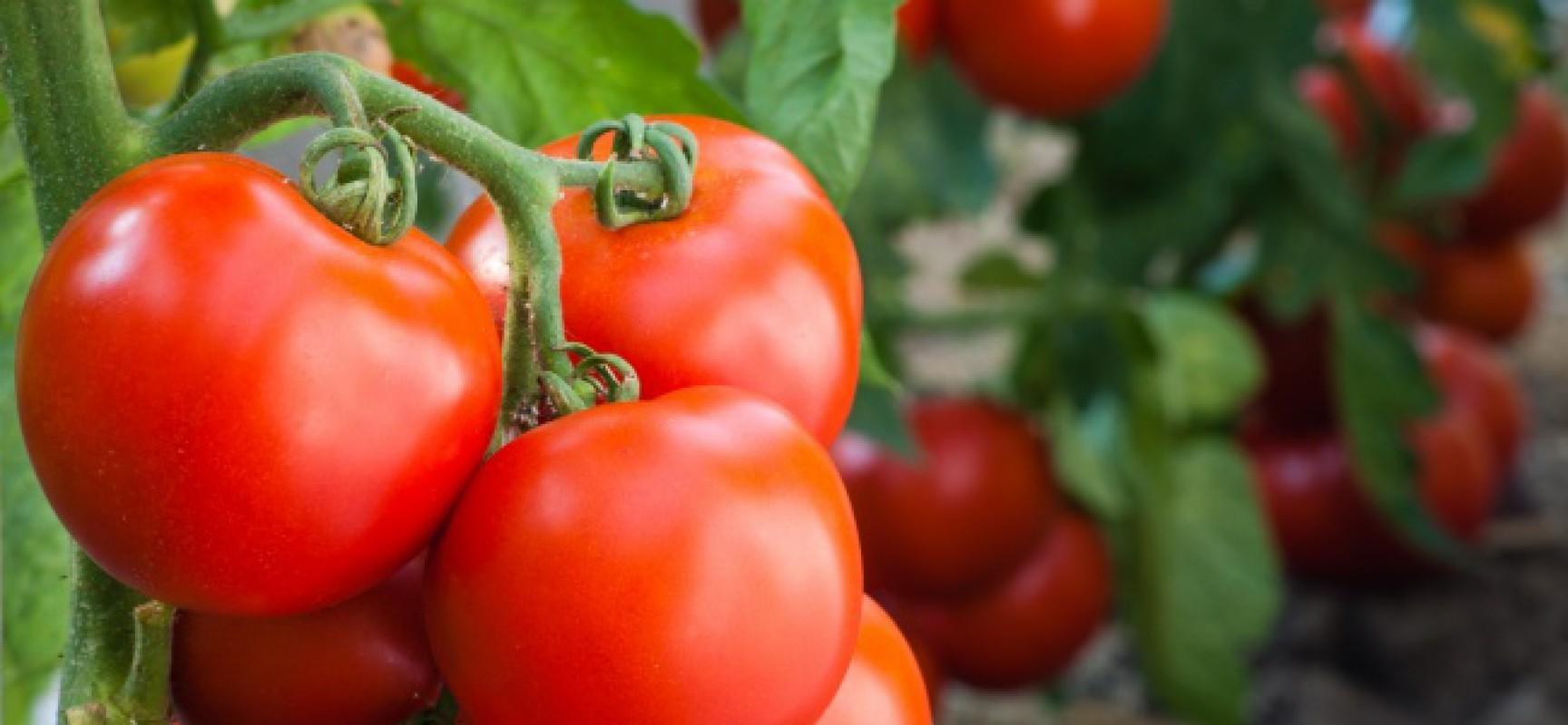 Sirkunsisel de los rvoles en la aktualidad el nahuate for Noctuelle de la tomate